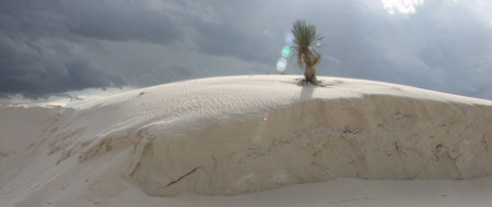 Tordenvejr,White Sands National Monument,Palme,New Mexico