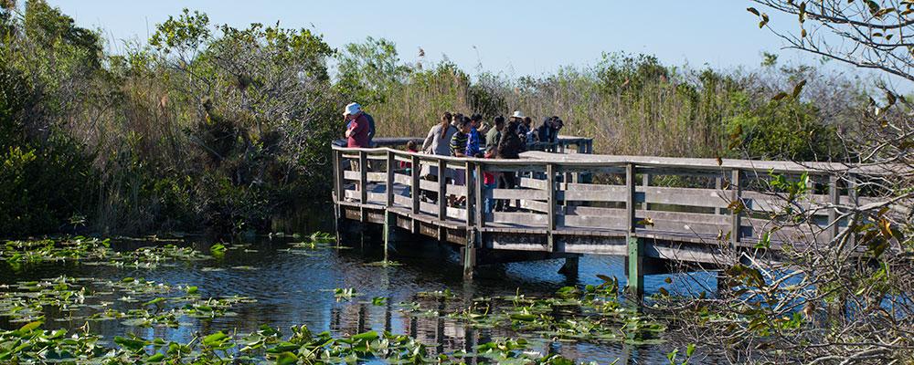 Gangsystem,Gangbro,Everglades National Park,Anhinga Trail