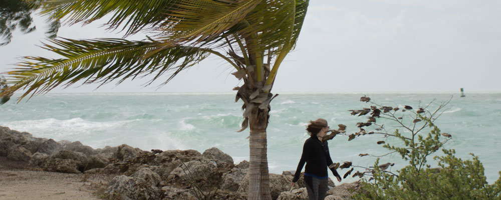 Storm,Vand,Kvinde,Palme,Key West