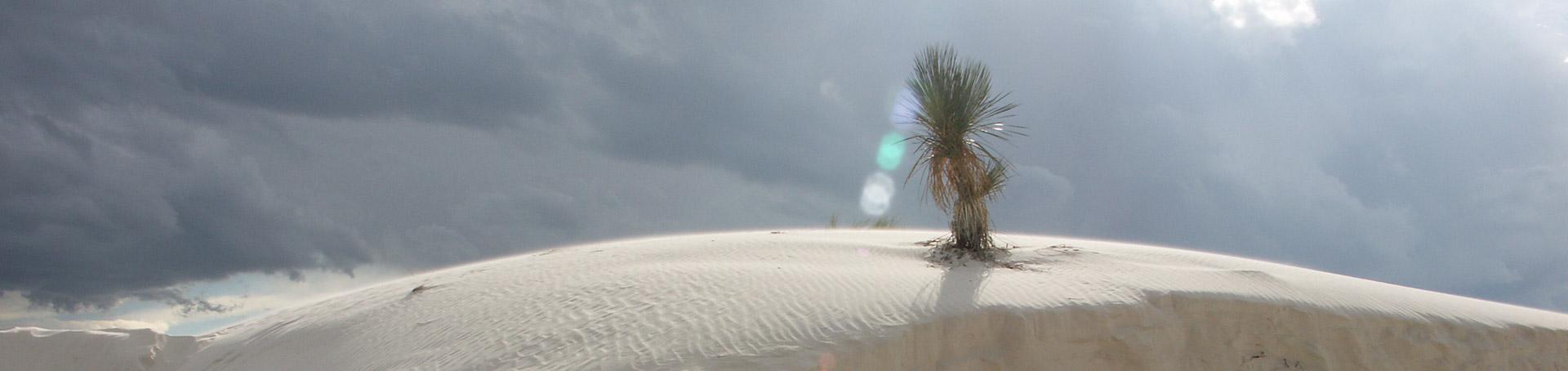 Tordenvejr,White Sands National Monument,Palme,New Mexico