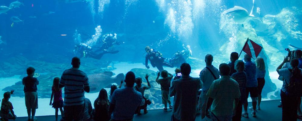 Dykkershow,Hvalhaj,Tilskuere,Dykkere,Georgia Aquarium